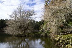 Lake McLaren | © Elyse Childs Photography New Zealand Lakes, Autumn Park, Country Roads, River, City, Photography, Outdoor, Outdoors, Photograph