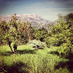 Sardegna, Montalbo, Siniscola (Nuoro)