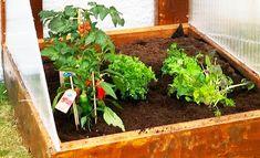 Hvordan lage minidrivhus selv - Byggmakker.no Terrarium, Plants, Home Decor, Terrariums, Decoration Home, Room Decor, Planters, Vivarium, Plant
