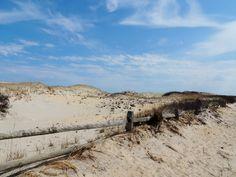 Island beach state park nj spring 2014
