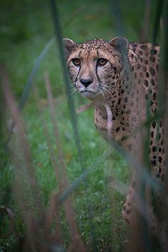 meowww | by luca paramidani