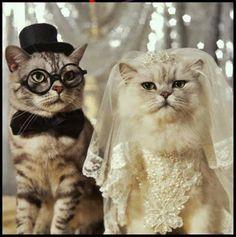 Belos noivos