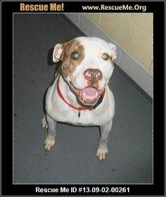 ― Kentucky Dog Rescue ― ADOPTIONS ―RescueMe.Org