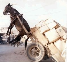 Get a Overloaded Donkey funny picture from Animals. You can get dozens of other funny pictures from Animals. Here are some samples of funny words: overloaded, donkey