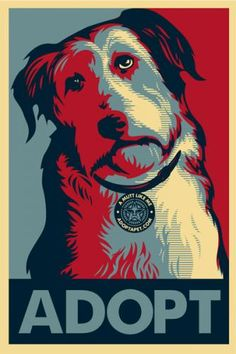 Let's all adopt.  Not sure why it's in the Obama poster colors or wearing a starbucks looking collar tag - ha ha