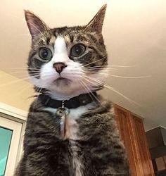 ある人が、自分のパソコンを誰かが勝手に使おうとしてパスワードを3回間違えると自動的に相手の写真を撮り、スマホに転送するよう設定していたら、こんな写真が送られてきたそうな。  犯人は猫!