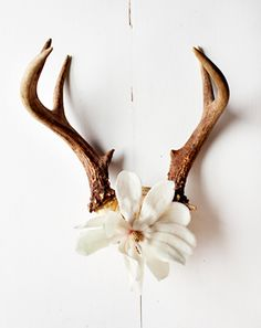 need to cover the blank spot on my antlers like this