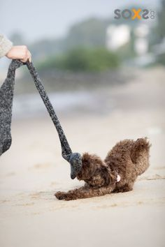 Learn about responsible wool! SOXS are created with respect for the animals. They are so soft, itch-free and will keep your feet dry during the summer, too! #socks #responsiblewool #animal #dog Sustainable Textiles, Textile Industry, Clothing And Textile, Wool Socks, Worlds Of Fun, Adorable Animals, Respect, Life Is Good, No Response