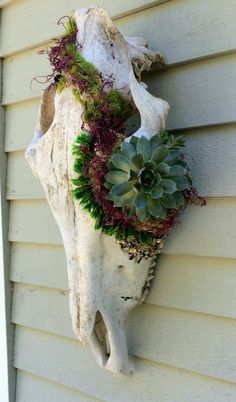 Summer Decor: Steer Skulls + Succulents Dress up your garden by combining steer skulls and succulents. These pretty pieces are fun and easy to make. Succulents are a do! Succulent Gardening, Cacti And Succulents, Planting Succulents, Container Gardening, Planting Flowers, Succulent Planters, Organic Gardening, Garden Art, Garden Design