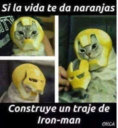Source by gemeasparaenses The post appeared first on Verschiedene rechtliche Informationen. Funny Animal Memes, Cat Memes, Funny Cats, Funny Animals, Funny Jokes, Hilarious, Avengers Memes, Marvel Memes, Funny Images