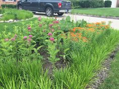 Rain Garden, Gardens, Building, Plants, Pictures, Photos, Buildings, Garden, Flora