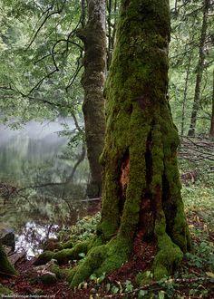 Ancient forest, Beogradska gora, Crna gora