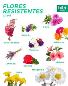 Discovery Home & Health Boquette Flowers, Planting Flowers, Beautiful Flowers, Garden Edging, Herb Garden, Garden Plants, House Plants Decor, Plant Decor, Petunias