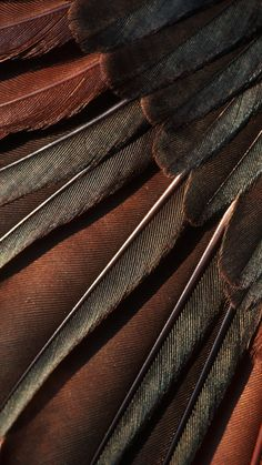 brown.quenalbertini: Brown feathers