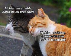 "19 Me gusta, 0 comentarios - Gatos Cool (@gatoscooloficial) en Instagram: "". . . #gatoscool😸 #memesdegatoscool #gatos_cool #novios #cosasdenovios #relaciones…"""