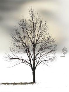 ✯ Winter on the Horizon