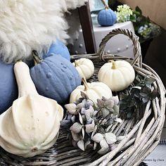 Dynia pumpkin blue farby kredowe chalk paint