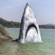 Someone painted this rock to make it look like a shark. #art