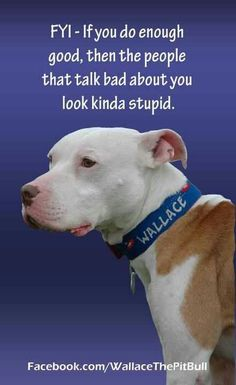 Wallace the Pit Bull i love Wallace and all that Roo Yori has done for him and the breed!