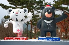 Meet the adorable Olympic mascots, Soohorang and Bandabi — CBS News Daegu, Korea Olympics, Olympic Mascots, Winter Games, Day Book, Learning Process, New Things To Learn, Event Calendar, South Korea