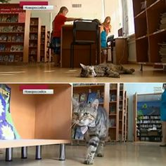 Cat hired as Assistant Librarian in Russia