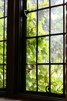 These windows! That greenery!