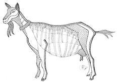animales bolillos - Marina Feijoo - Picasa веб-албуми