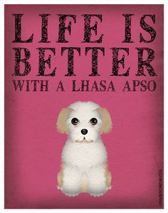 Life is Better with a Lhasa Apso - my little love, Maggie!!  This is so true.