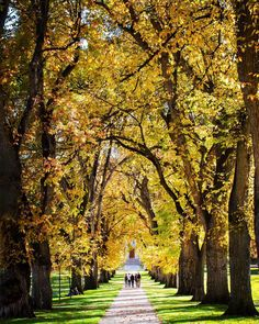 We couldn't resist sharing. Colorado State University is the most beautiful place. Ever.