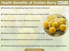 Some of the most impressive health benefits of Golden Berries include their ability to help lose weight, detoxify the body, manage diabetes, optimize kidney function, reduce inflammation, prevent certain degenerative diseases, boost heart health, and maximize immune function. Golden berries depending on where you are in the world, you may know golden berries by various names, including Cape Gooseberry, Aztec berry, poha, harankash, or Physalis, among a dozen or more other common names.