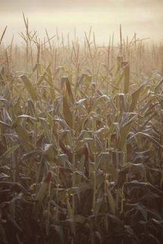 How to Make a Corn Stalk