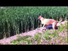 This Dog Jumping Through A Field Like A Kangaroo Is The Happiest Thing You'll See All Day.