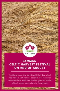 Lammas: On of August we harvest the fruits that we have sown. Now it's harvest time, in the actual and figurative sense. Yoga Teacher Training in India Ayurveda, Alternative Heilmethoden, Harvest Time, Yoga Teacher Training, Shamanism, Harvest Party, Celtic, Lamb