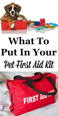 Dog Health - If you're a pet owner you should be prepared for minor medical emergencies your pets may have. Here is what to put in your pet first aid kit today. Boxer Dogs, Boxers, Pet Dogs, Doggies, Pet Vet, Dog Care Tips, Pet Care, Puppy Care, Animal Projects