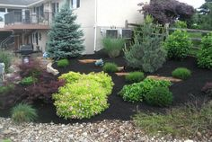 evergreens with perennial flowers - Google Search