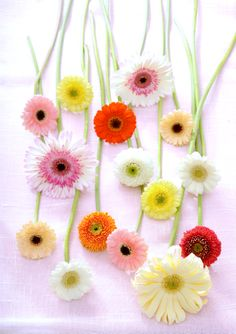 Gerbera #Flowers #Bloemen Mooiwatbloemendoen.nl