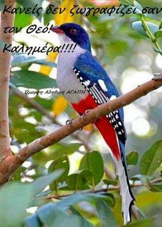 Greek Quotes, Blue Jay, Good Morning, Flower Arrangements, Birds, Nature, Animals, Avon, Night