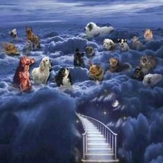 I know there is a Rainbow Bridge (true dog lovers know it), but this is a sweet stairway to heaven for dogs (All dogs Go to Heaven :) ) Love My Dog, Dog Heaven Quotes, Dog Quotes, Animals And Pets, Cute Animals, Pet Loss Grief, Dog Poems, Amor Animal, Baby Chihuahua