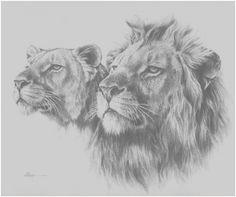 Carta de agradecimiento al Rey de la Selva