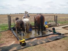 Barn Storage, Horse Care, Donkeys, Type 1, Baths, Fields, Horses, Facebook, Animals
