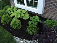 """""""sum and substance"""" hostas and boxwoods"""
