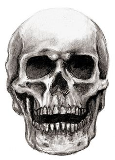 pencil drawings | neatly with pencil see some of the latest drawings of skull select the ...