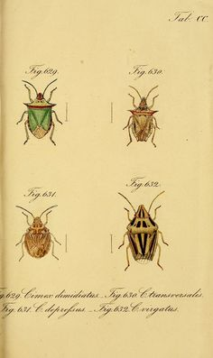 The bug-like insects: faithfully mapped to the nature and...
