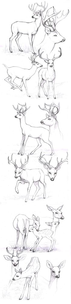 sketches_deers by Anisis on deviantART Different look for antlers.