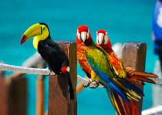 .Toucan and Parrots