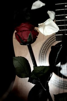 Rose and music Music Aesthetic, Red Aesthetic, Aesthetic Photo, Songs About Flowers, Acoustic Guitar Lessons, Acoustic Guitars, Guitar Diy, Rose Images, Henna Tattoo Designs