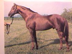 Lorenzaccio xx: Pferd, Stammbaum - rimondo