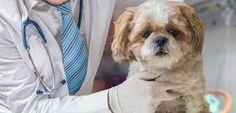 ¿Conoces las enfermedades parasitarias de tu perro ? Presiona la foto y averígualas.  Muchas son de vida o muerte