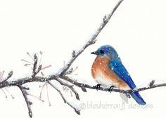 watercolor bird- Bluebird- 5x7 print on Etsy, $16.00
