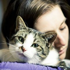 Help People and Pets Escape Domestic Violence at The Animal Rescue Site